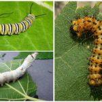 Alimentarea cu Caterpillar