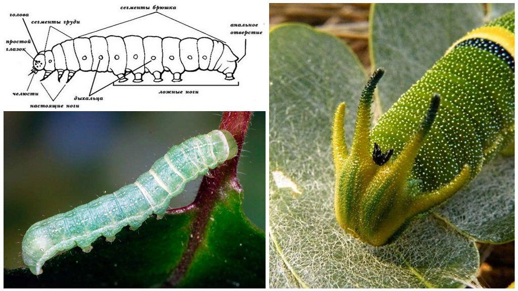 Structura Caterpillar